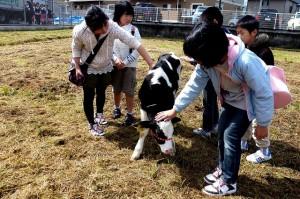 小牛の赤ちゃん
